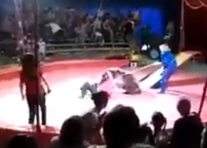 На видео попало нападение медведя на дрессировщика в Волгоградской области