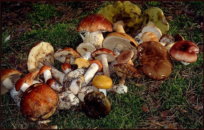 Семья из четырех человек отравилась грибами в Волгограде