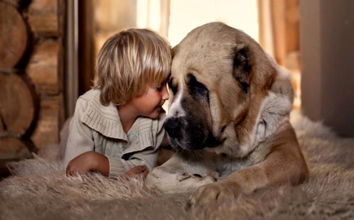 Желтая Собака помирит тех, кто в ссоре, и поможет честным волгоградцам