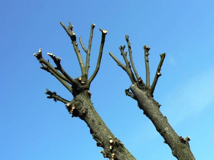 Больше 30 тыс руб требует волгоградская школа с родителей за вывоз сухих деревьев