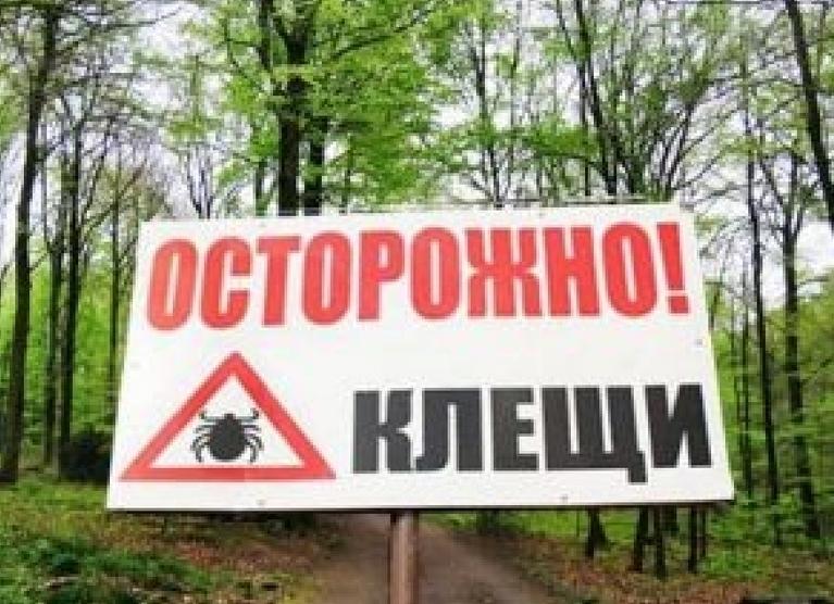 В Волгограде в три раза выросло количество случаев укуса клещами