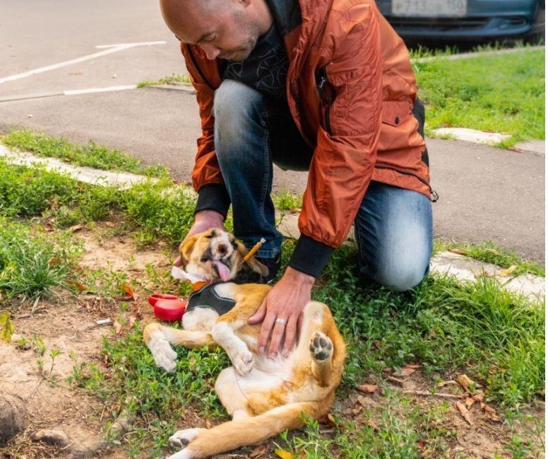 В Москве провели сложнейшую пластическую операцию щенку из Волгограда с огнестрельным ранением