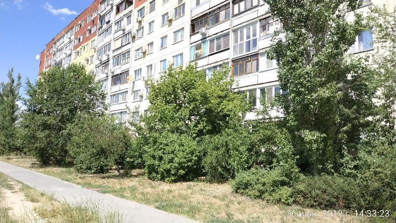 «Жители Волгограда готовы с вилами выйти на защиту деревьев от вырубки», - общественник