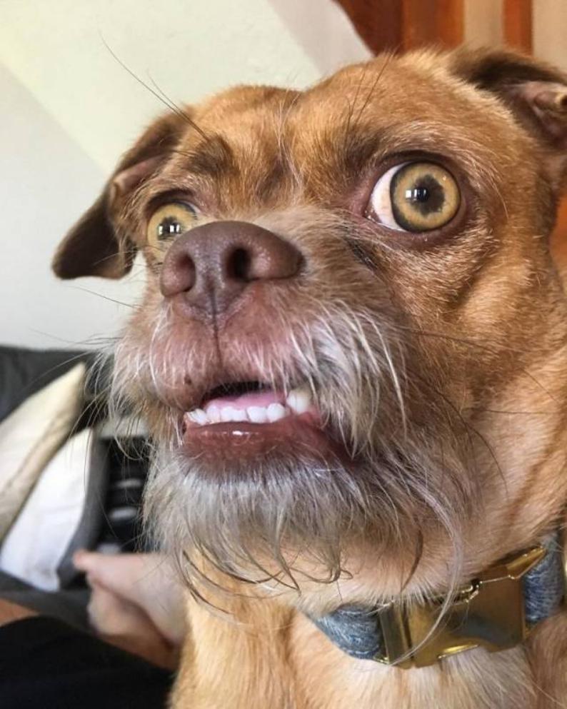 Волгоградские чиновники углубились в проблему собачьих какашек
