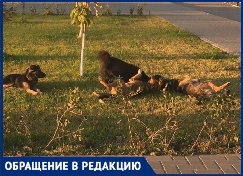 «Боимся отпускать детей»: стаи бродячих собак держат в страхе поселок под Волгоградом