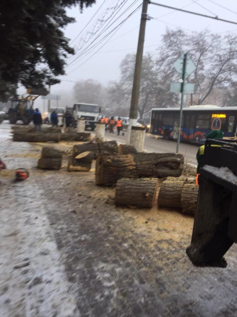 В самом центре Волгограда власти варварски вырубают деревья