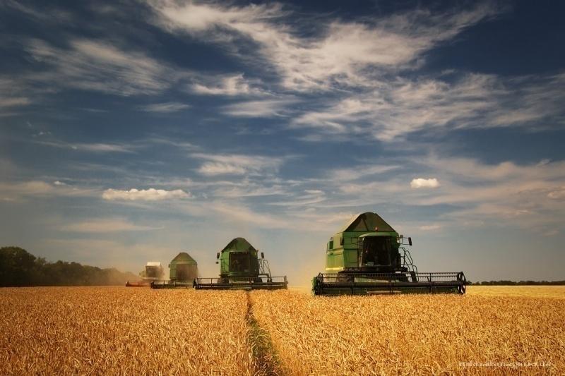 Волгоградские аграрии собрали половину планового урожая