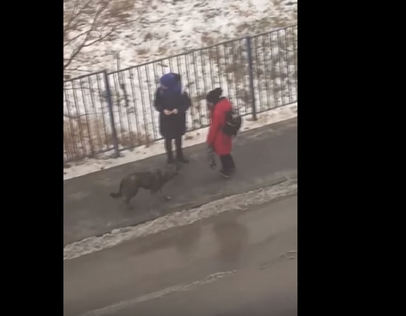 «Агрессивный» претендент на отлов оказался любимой собакой волгоградской детворы
