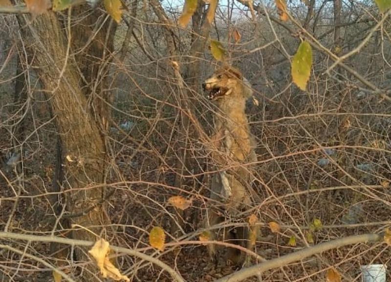 Труп повешенной собаки на дереве больше недели пугает волгоградцев