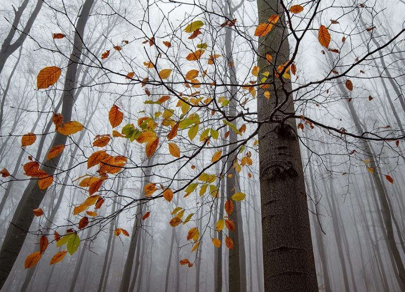 Мужчина с родственниками ушел в лес в Волгоградской области и заблудился
