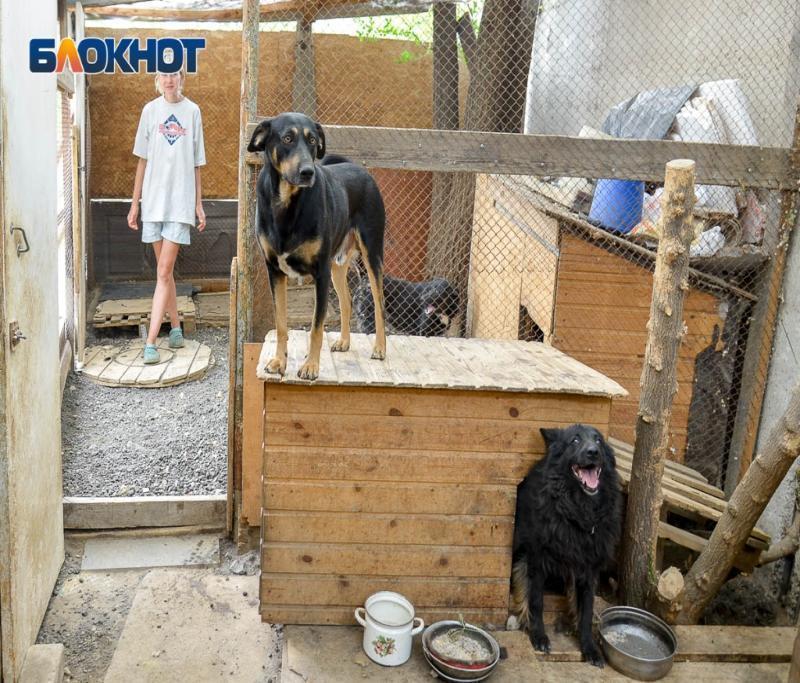 После публикации «Блокнот Волгограда» неравнодушные помогают приюту, который на улицу гонят чиновники