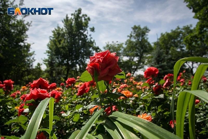 Гроза с жарой до +30°C настигнут жителей Волгограда и области