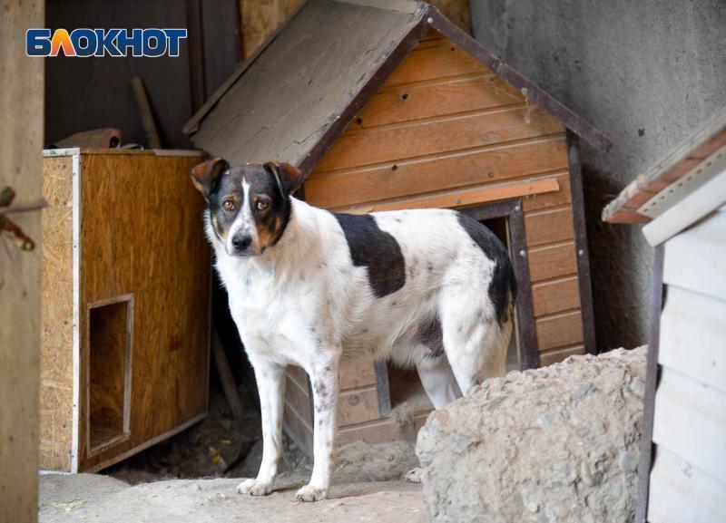 В помощи с переездом нуждается волгоградский приют с 41 животным, который чиновники гонят на улицу