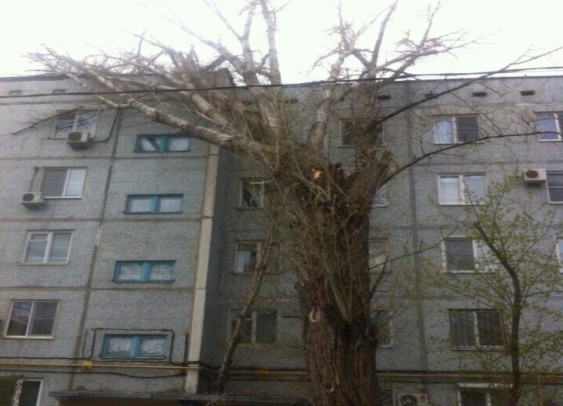В Кировском районе Волгограда на жилой дом от сильного ветра рухнул старый тополь