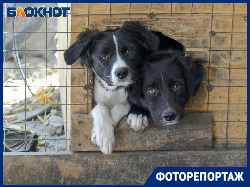 Больше 40 травмированных животных могут вышвырнуть из приюта в Волгограде