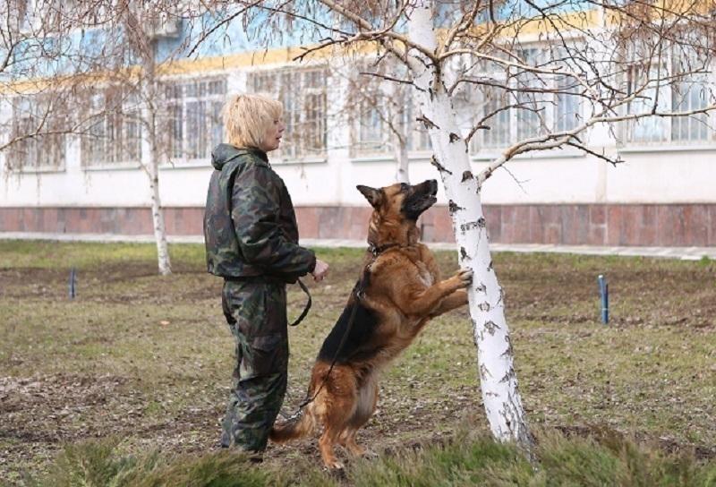 Волгоградские служебные собаки - пример профессионализма и стойкости до самой смерти