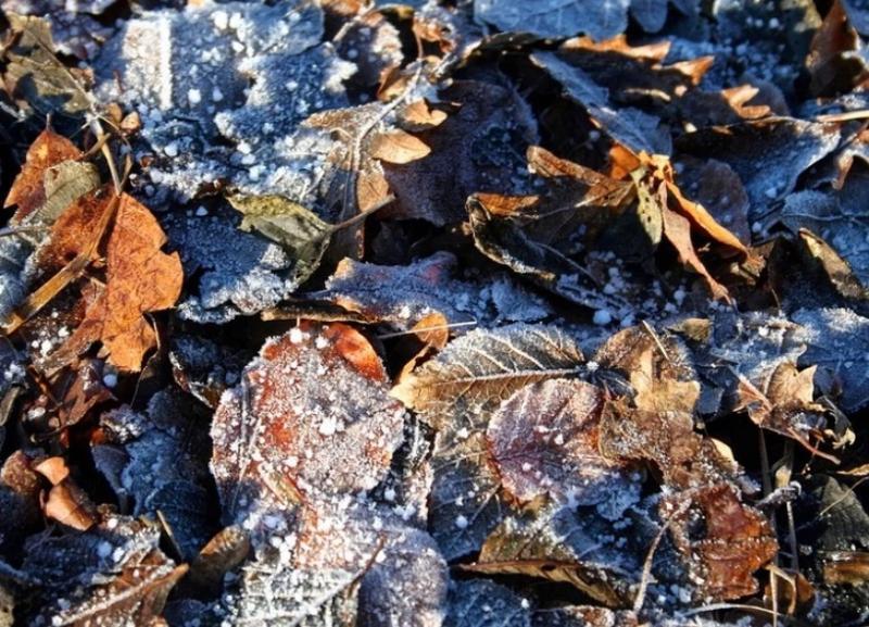 Мороз сбавит обороты к выходным в Волгограде