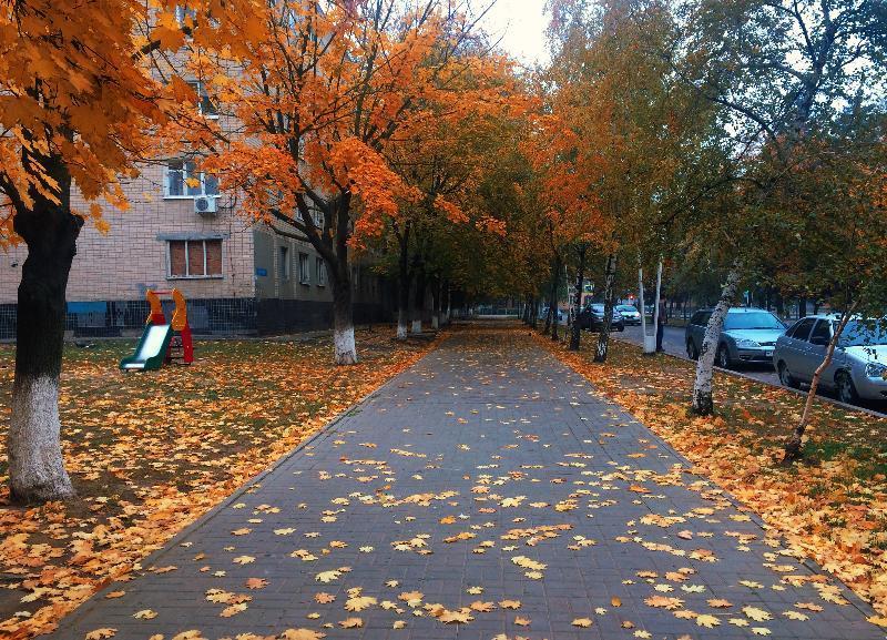 В Волгограде продолжает сохраняться прохладная и туманная погода