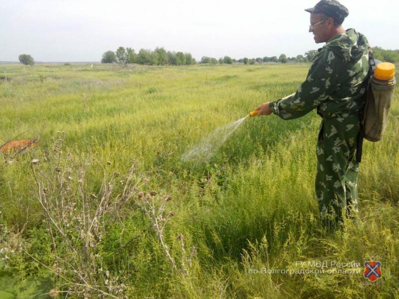 Испарения от сожженной конопли поплыли по Волгоградской области
