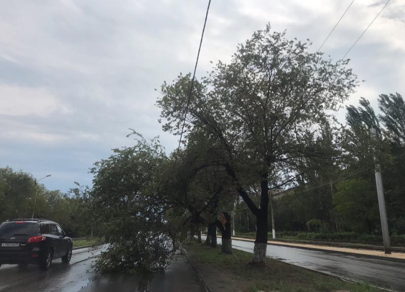 После сильного ветра дерево рухнуло на линию электропередач в Волжском