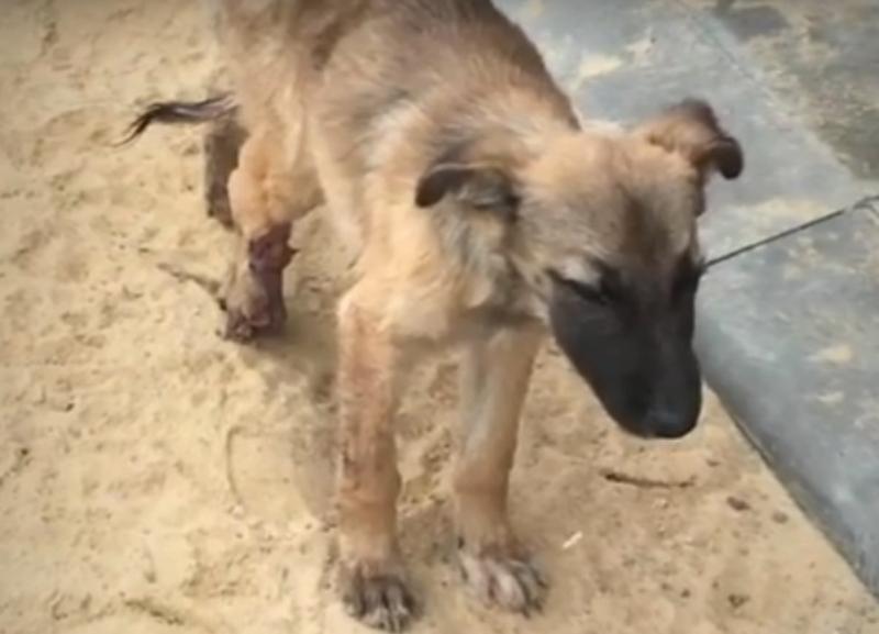 Заживо гниющего щенка продолжают спасать в Волгограде