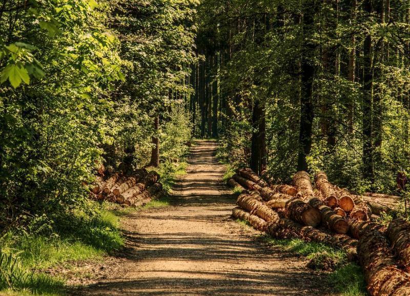 На выяснение границ зеленого пояса потратят больше 1,5 миллиона рублей в Волгоградской области