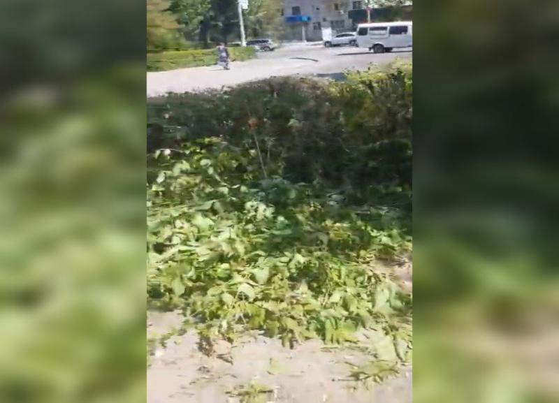 После публикации «Блокнот Волгограда» оперативно спилили ветки на пешеходном переходе в Волжском