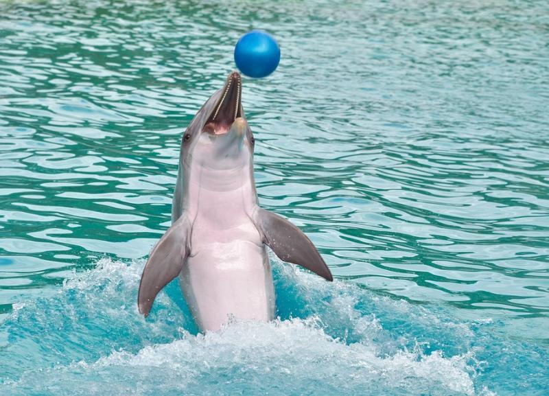 Почти четыре тысячи волгоградцев выразили свой протест против строительства дельфинария в городе