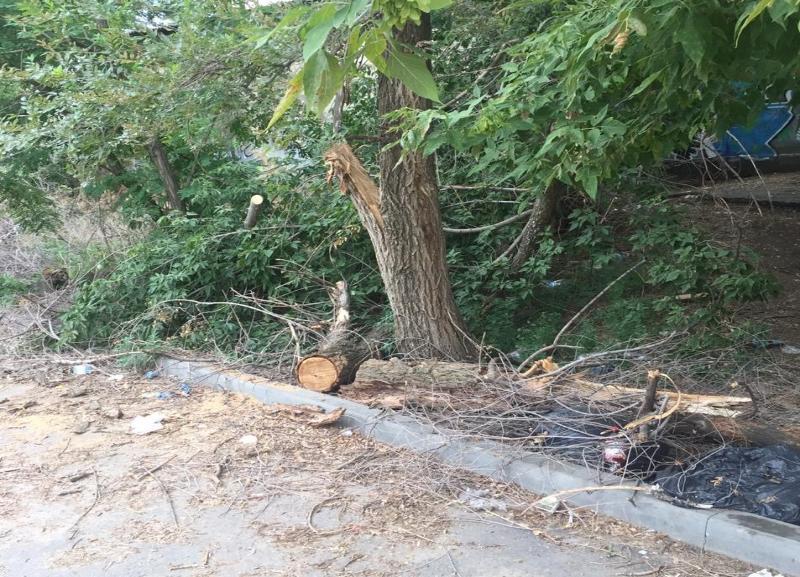 После публикации в «Блокнот Волгограда» нависшую над дорогой ветку дерева спилили, но убрать забыли
