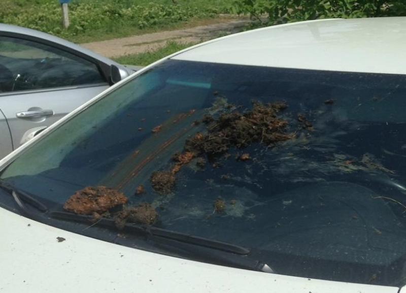Автомобиль адвоката экс-главы Росприроднадзора региона измазали фекалиями во время судебного процесса