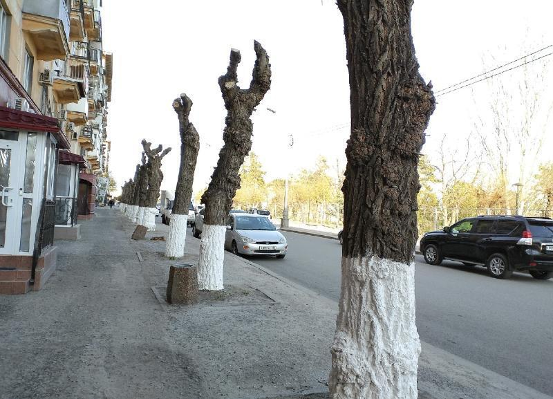 Почему аллергики в Волгограде скоро начнут страдать, заявил член регионального ОНФ