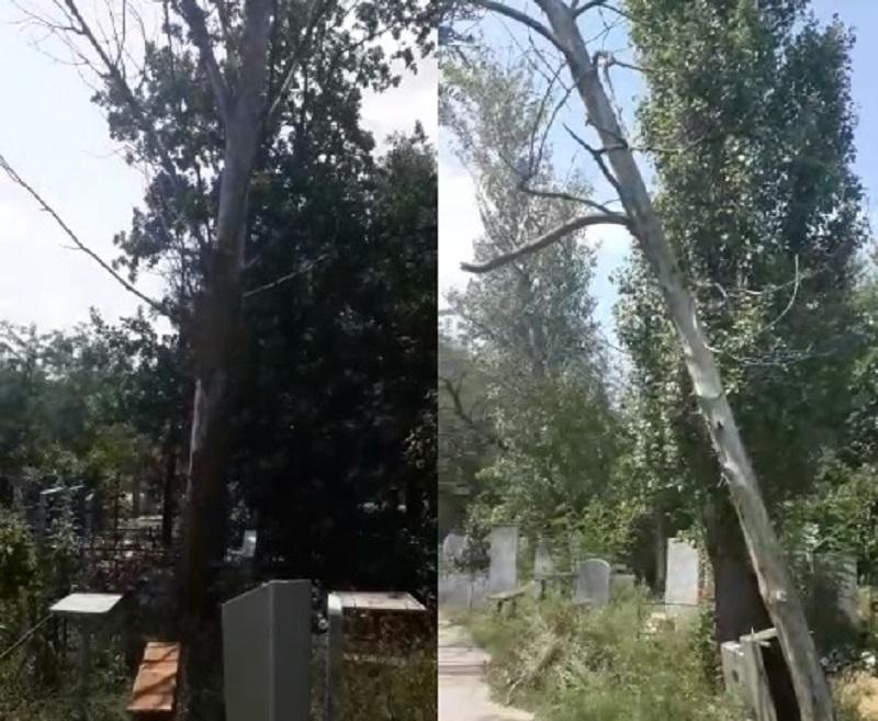 Из-за аварийных деревьев волгоградцы боятся ходить на Моторное кладбище