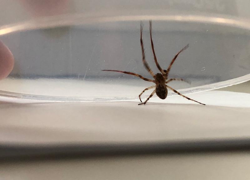 Большой цветной паук напугал жителей Волжского