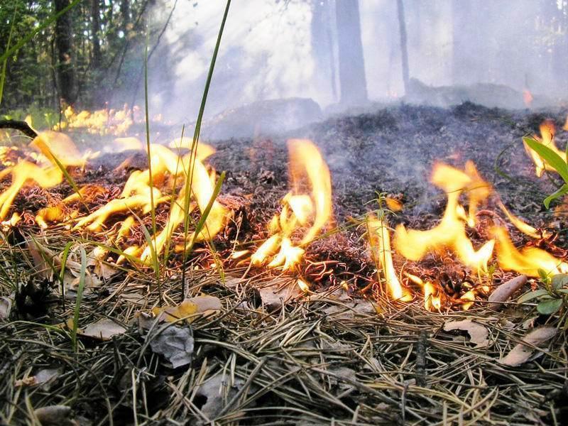 Пожарные отработали навыки борьбы с ландшафтным огнем