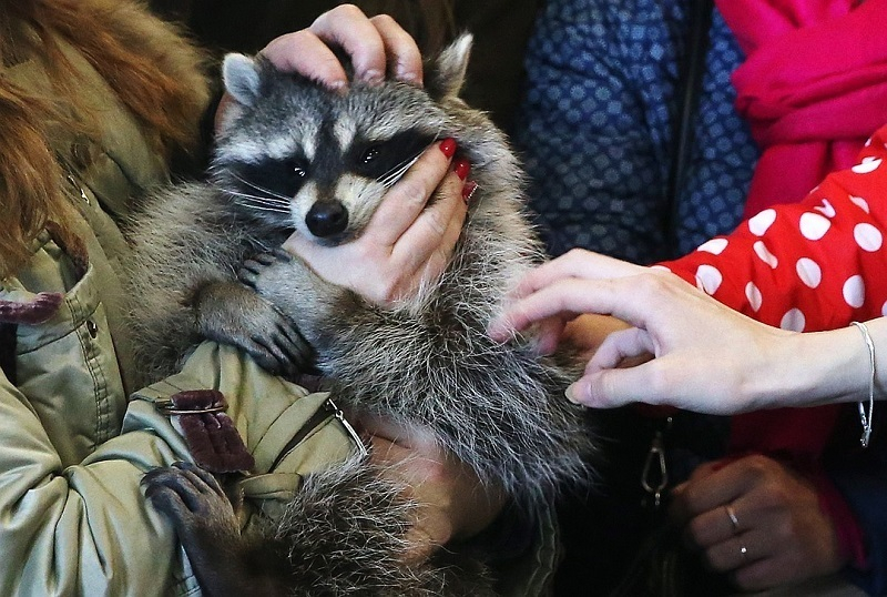 Прошедший II чтение в ГД законопроект об обращении с животными уберет из Волгограда все контактные зоопарки