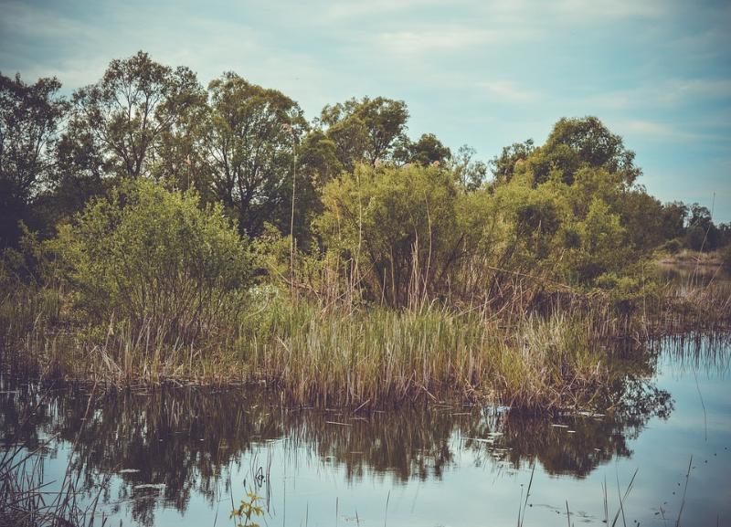Мужчина утонул в реке рядом с домом в Волгоградской области