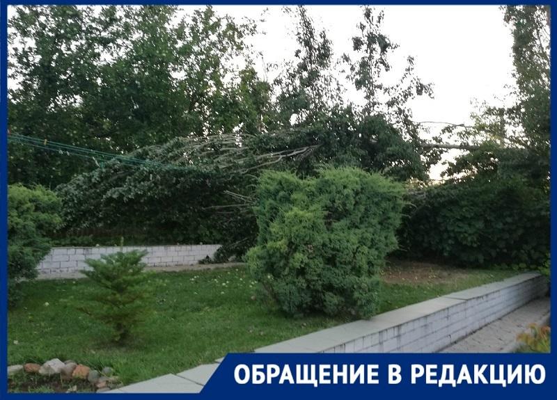 Пять старых тополей могут оставить без жилья жителей домов в поселке Вторчермет на юге Волгограда