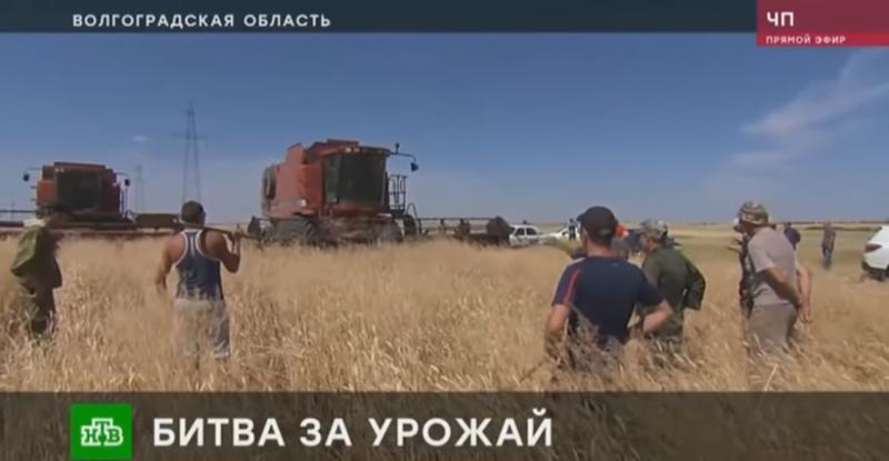 Скандал федерального масштаба: у волгоградских крестьян неизвестные «отжимают» зерно на 100 миллионов рублей