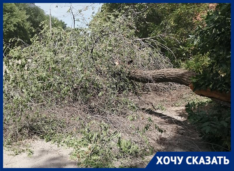 Волгоградец записал видео с места, где на его автомобиль упало дерево