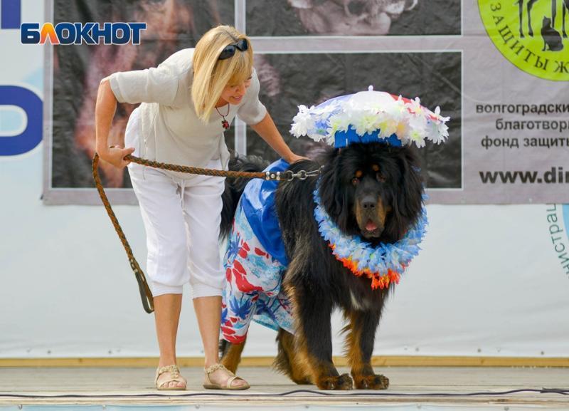 «Собачников» из Волгограда приглашают на «Хвостатый карнавал»