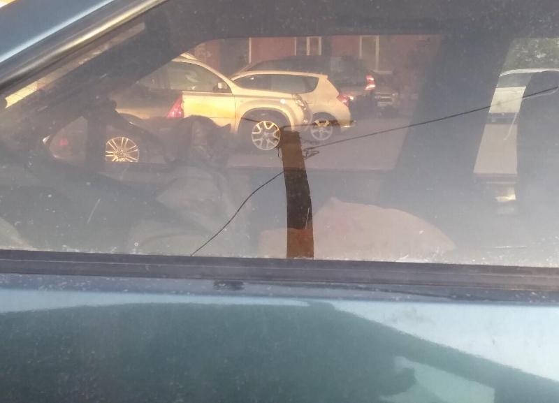 Запертого котенка в машине обнаружили неравнодушные волжане