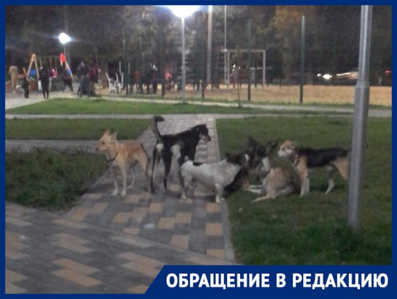 Стая бродячих собак распугала детей в новом парке Волжского