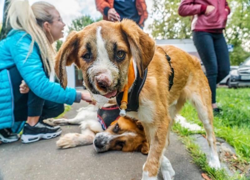 Пластику носа сделают щенку с огнестрельным ранением из Волгограда