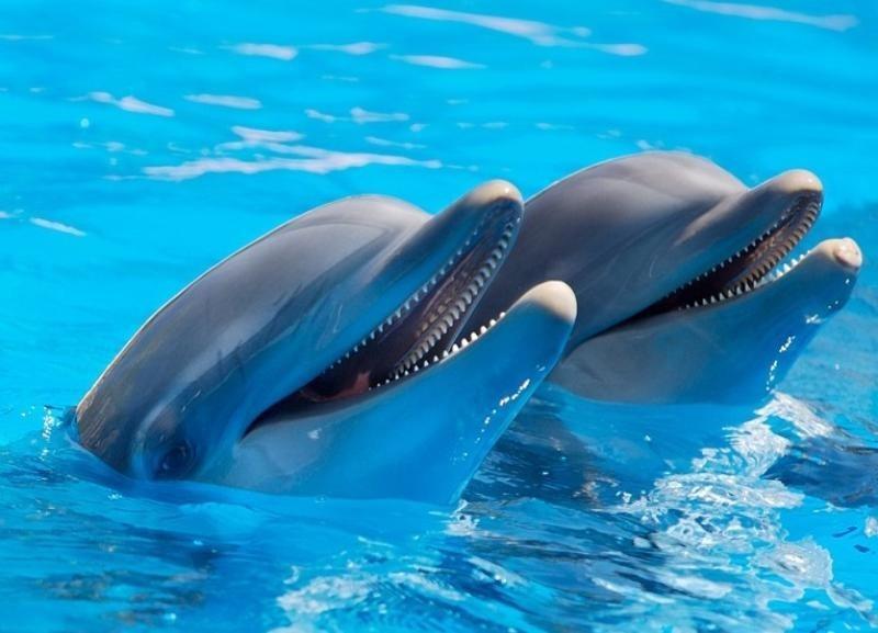 «Нефиг новые садисткие развлекухи в город тащить», - волгоградский блогер о намерении чиновников построить дельфинарий