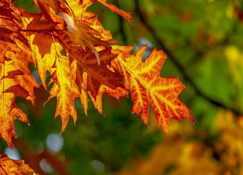 Гороскоп на месяц: октябрь подходит для начала новой жизни, возможны судьбоносные события