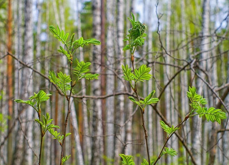 Понедельник начнется для жителей Волгоградской области без дождей