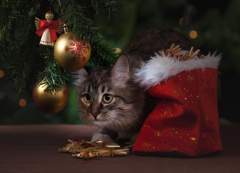 «Блокнот Волгоград» запускает спецпроект к Новому году