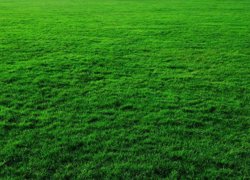 Искусственный газон на футбольном поле у ВГАФК отремонтируют за 4 млн рублей