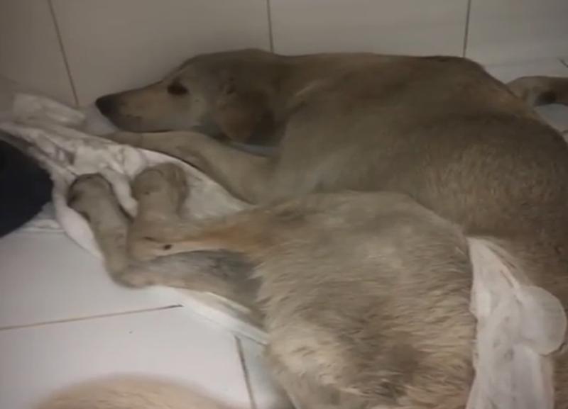Ненужная жизнь: в Волгограде не смогли спасти пса, которого сбили и бросили на Мамаевом кургане