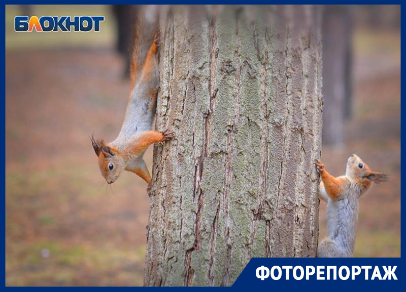 Тайную жизнь белок на Мамаевом кургане показал фотограф из Волгограда
